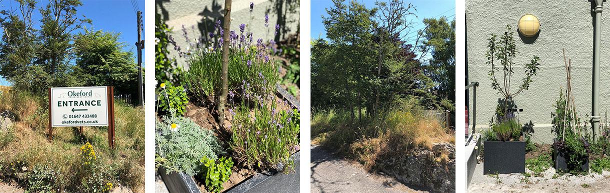 Chagford wild flower garden